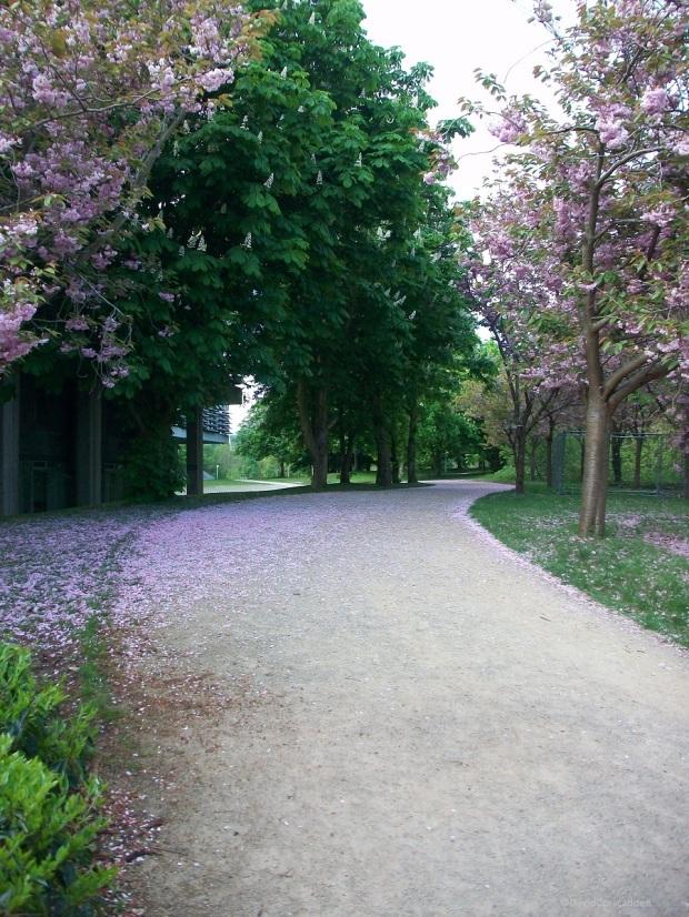 Mixture of Trees in UCD